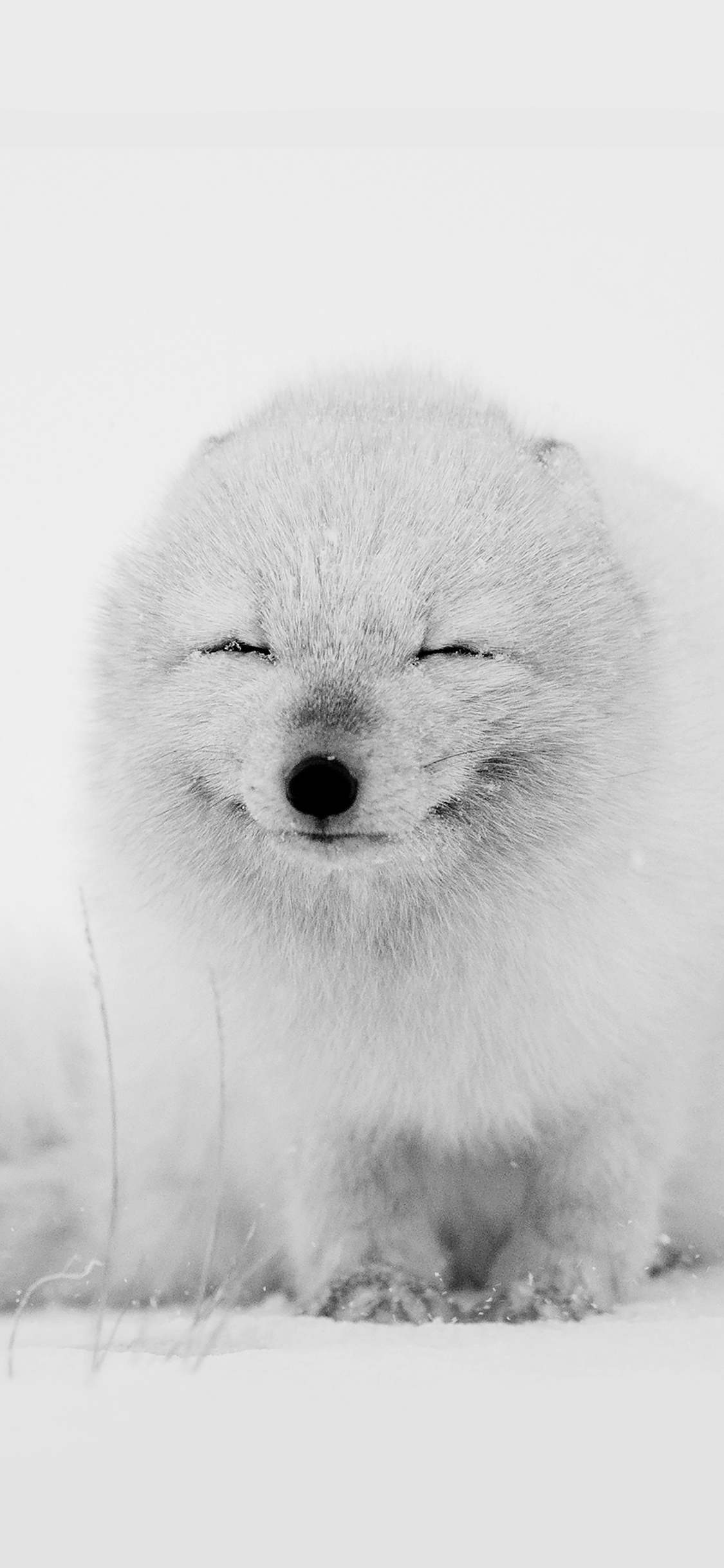 iPhoneXpapers.com-Apple-iPhone-wallpaper-af02-arctic-fox-happy-moment