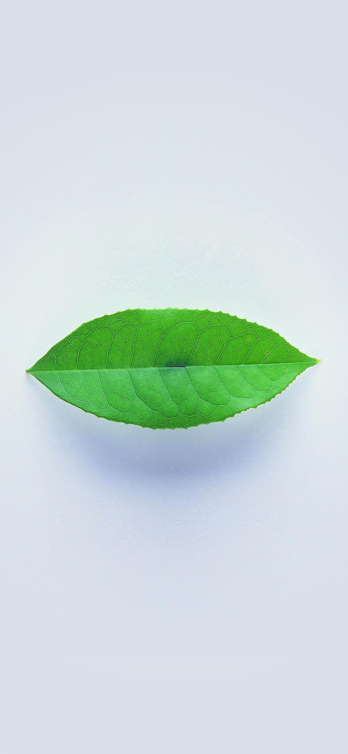 iPhoneXpapers.com-Apple-iPhone-wallpaper-ah89-green-leaf-minimal-nature-art