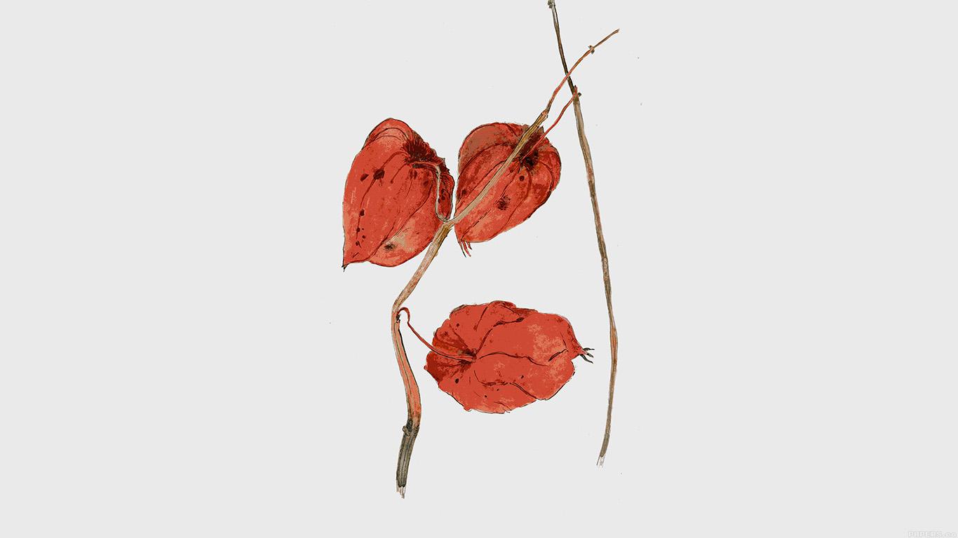 wallpaper-desktop-laptop-mac-macbook-al05-liz-illust-art-flower-drawing-wallpaper