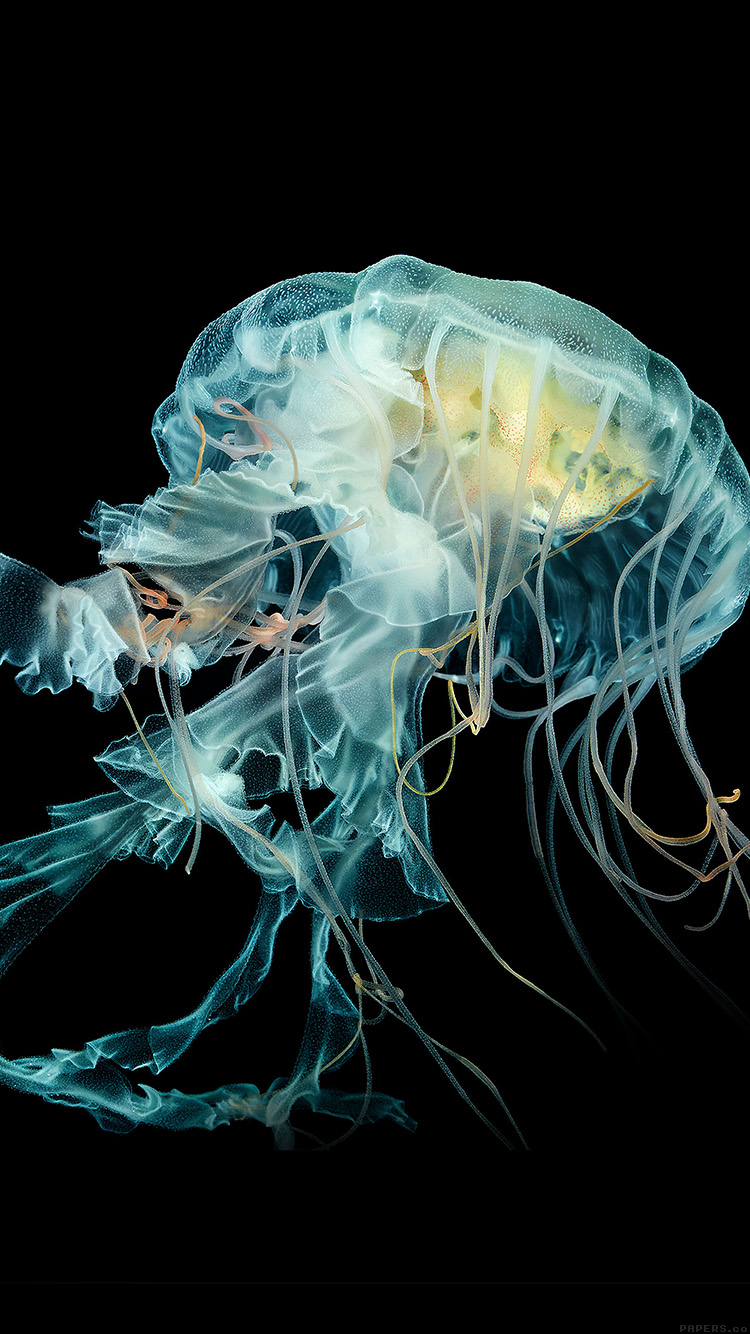 iPhone7papers.com-Apple-iPhone7-iphone7plus-wallpaper-al41-apple-watch-wallpaper-jellyfish-art-nature