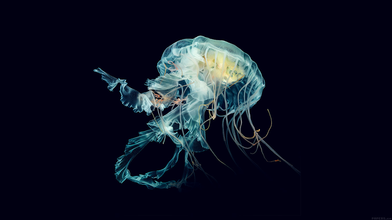 desktop-wallpaper-laptop-mac-macbook-airal43-apple-watch-wallpaper-jellyfish-art-nature-blue-wallpaper