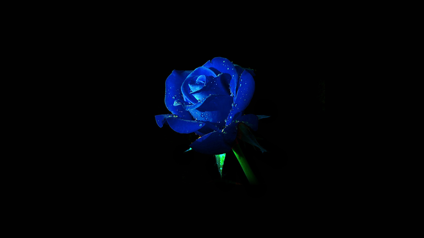 desktop-wallpaper-laptop-mac-macbook-air-am02-blue-rose-dark-flower-nature-wallpaper
