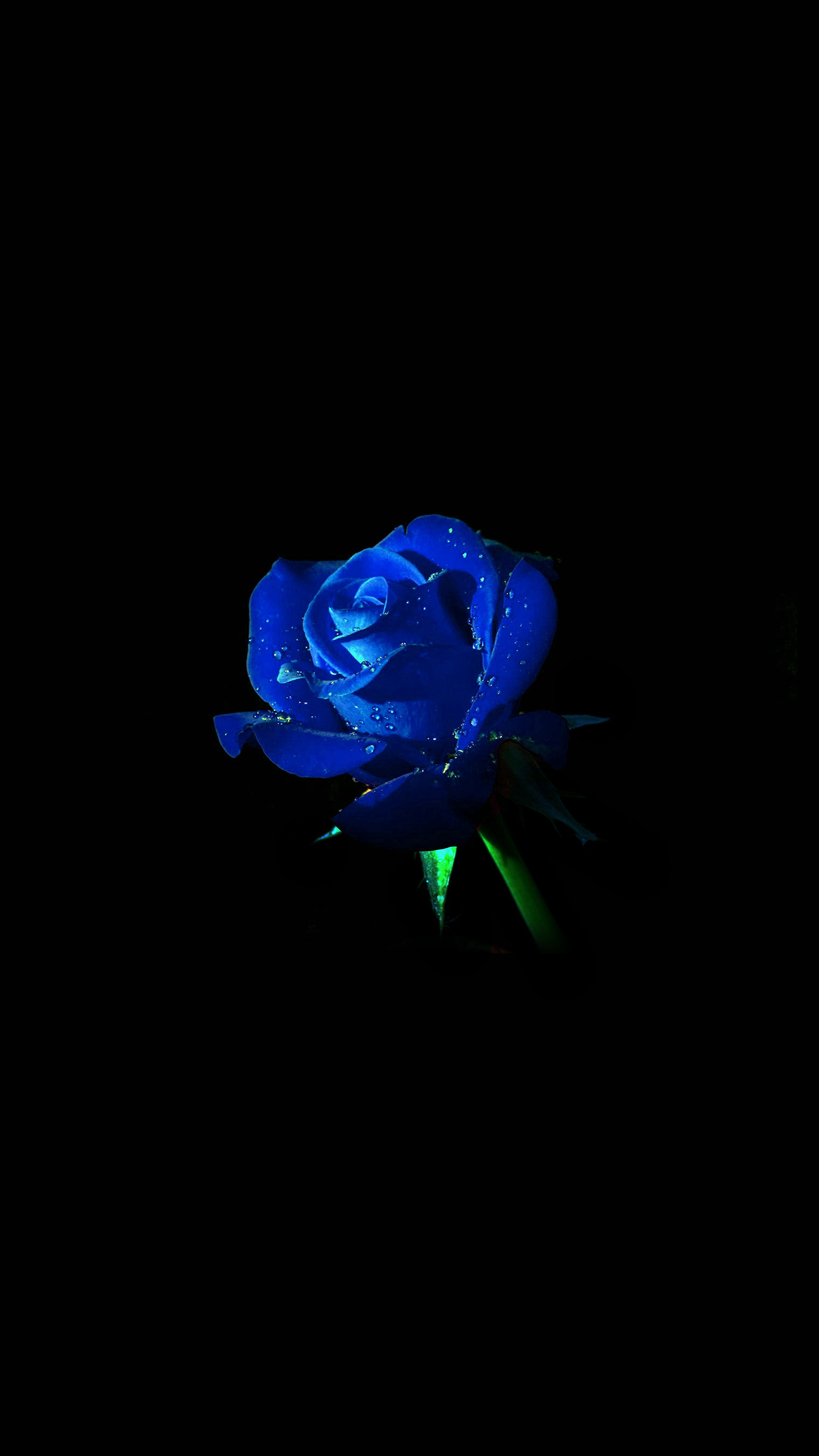 iphone7papers | iphone7 wallpaper | am02-blue-rose-dark-flower