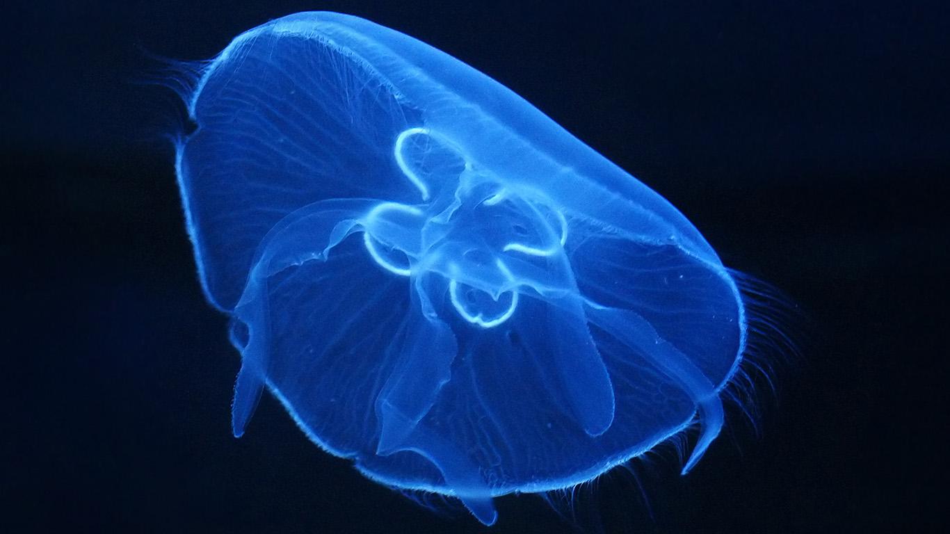 desktop-wallpaper-laptop-mac-macbook-airan04-deep-ocean-life-jellyfish-blue-dark-nature-wallpaper