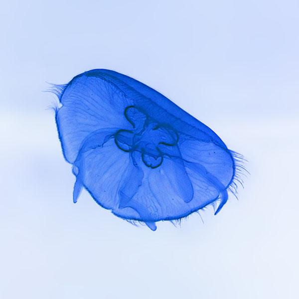 iPapers.co-Apple-iPhone-iPad-Macbook-iMac-wallpaper-an05-deep-ocean-life-jellyfish-blue-white-nature-wallpaper