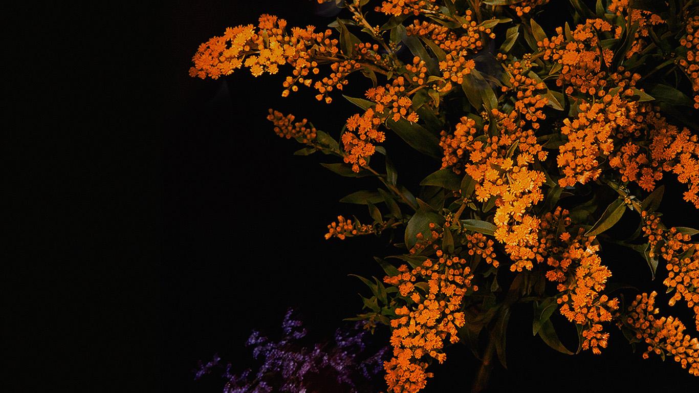 An58 Apple Orange Flower Dark Ios9 Iphone6s Papers Co