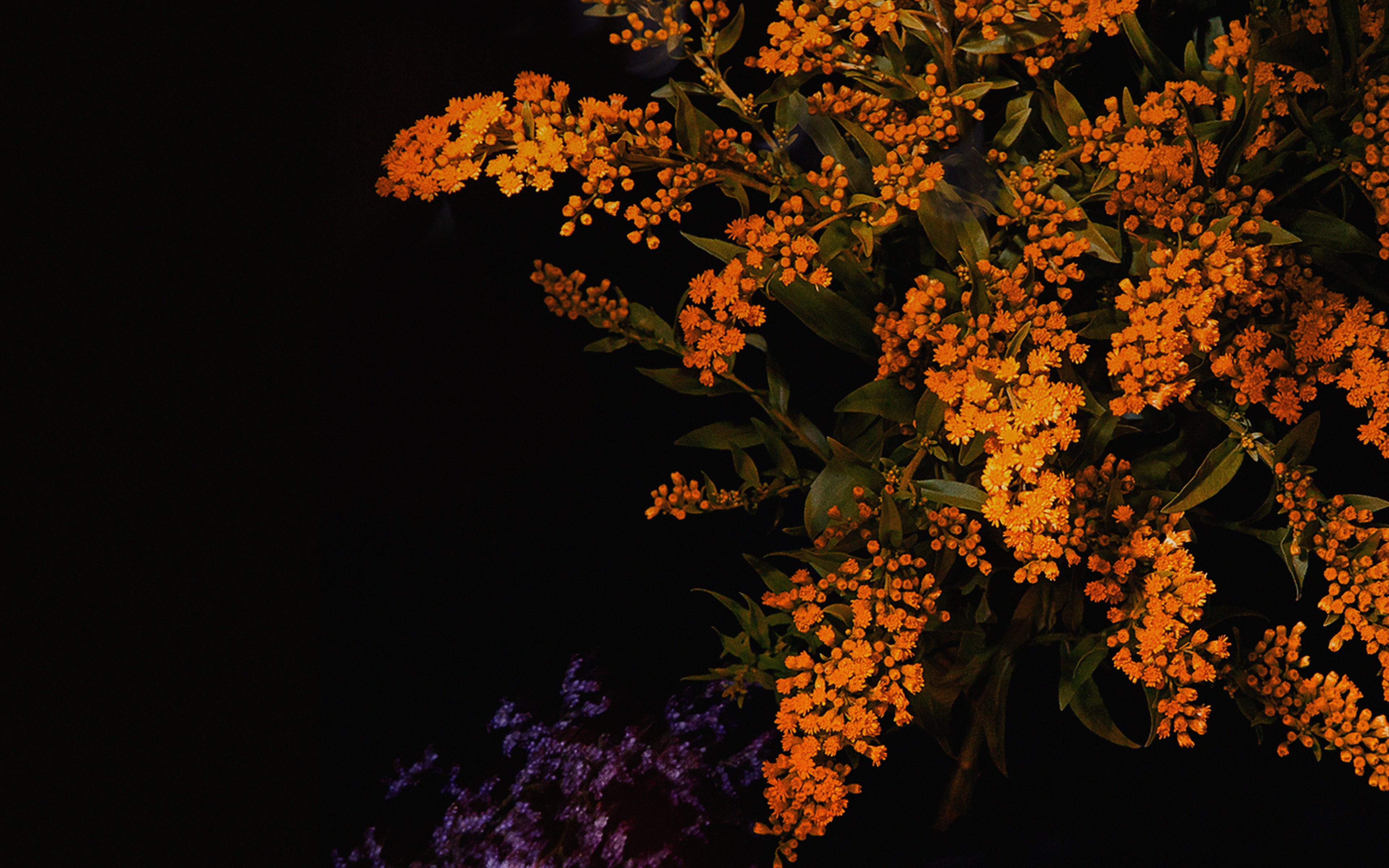 An58 Apple Orange Flower Dark Ios9 Iphone6s Papersco