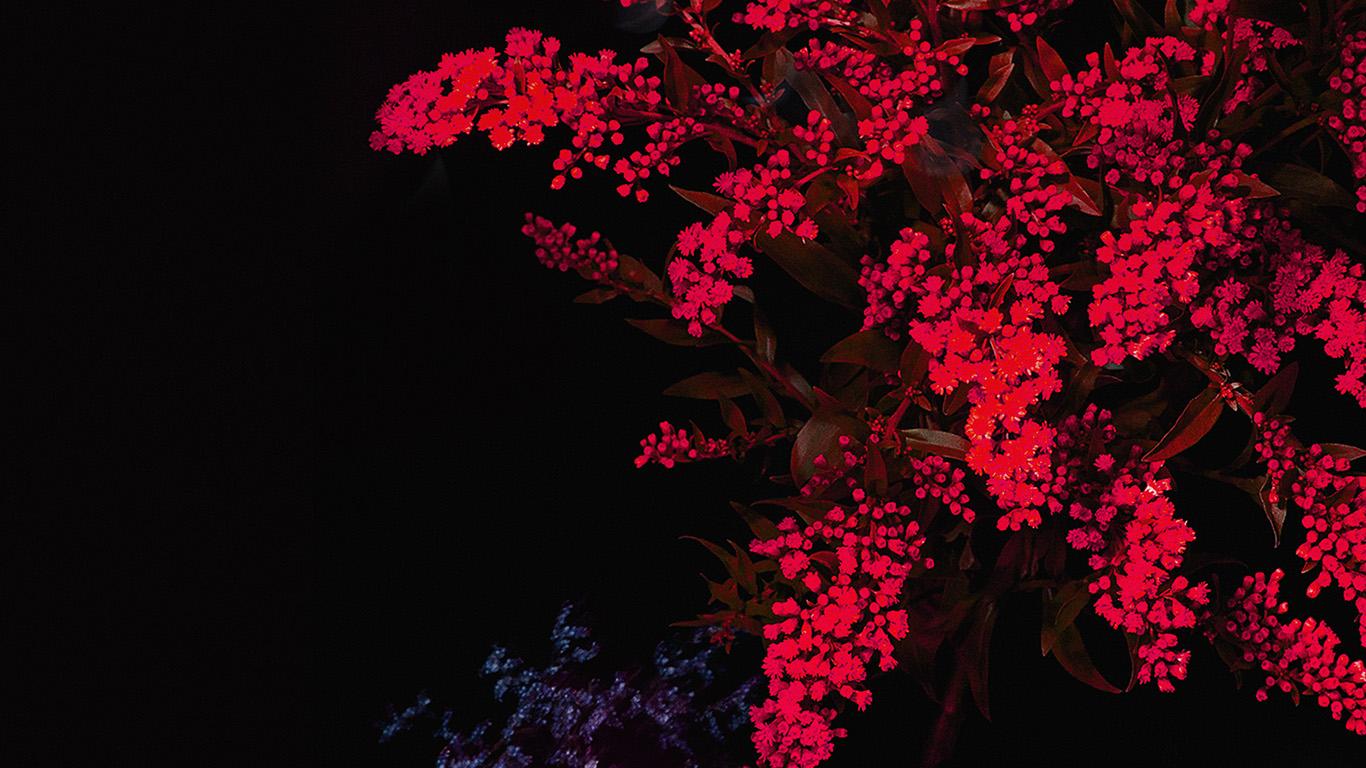 desktop-wallpaper-laptop-mac-macbook-air-an59-apple-red-flower-dark-ios9-iphone6s-wallpaper