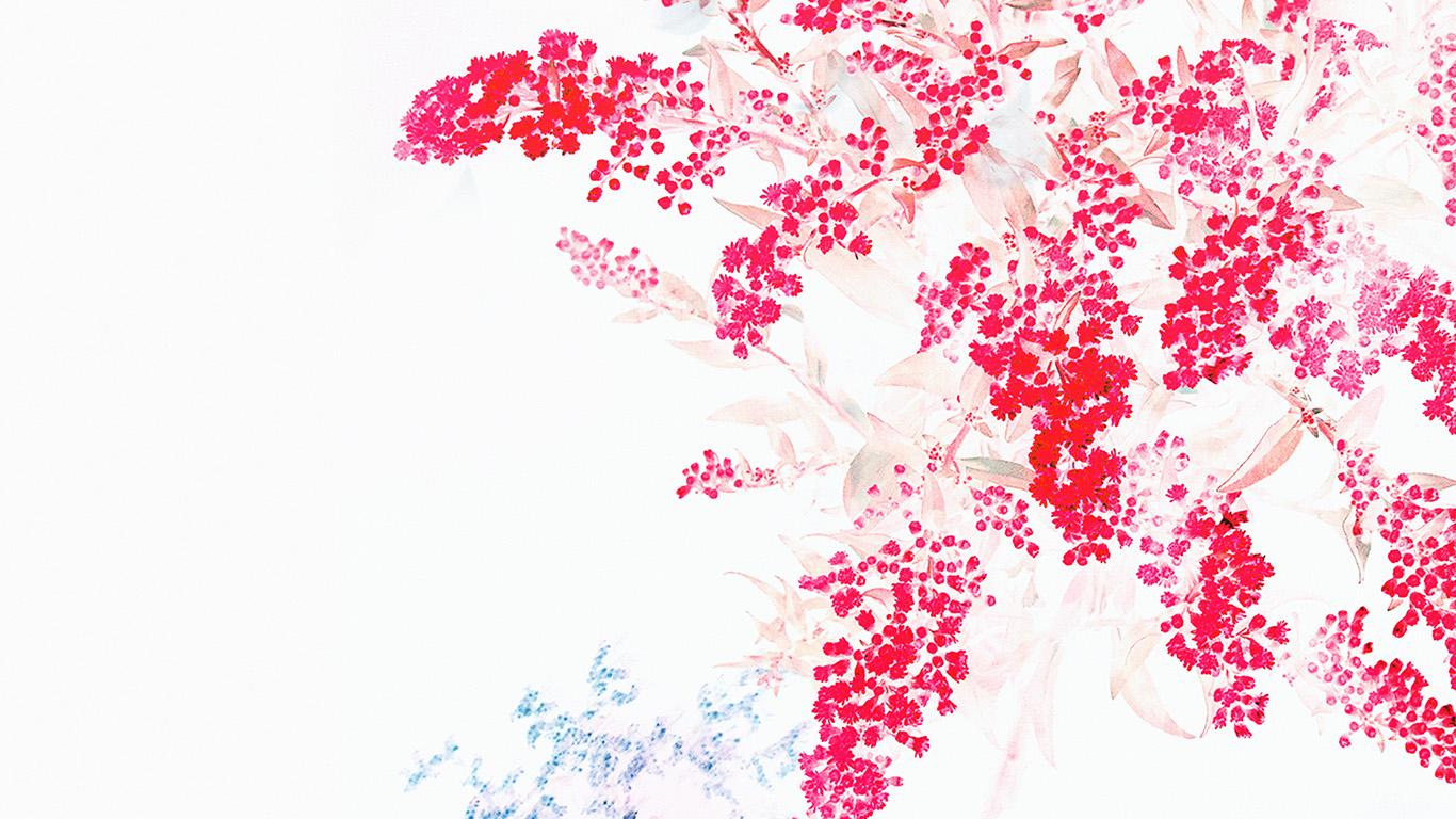 Wallpaper for desktop laptop an60 apple red white flower ios9 1366 x 768 mightylinksfo