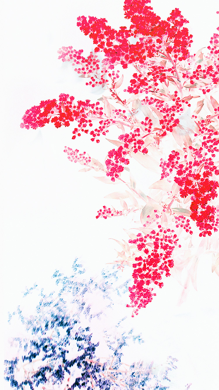 iPhone6papers.co-Apple-iPhone-6-iphone6-plus-wallpaper-an60-apple-red-white-flower-ios9-iphone6s