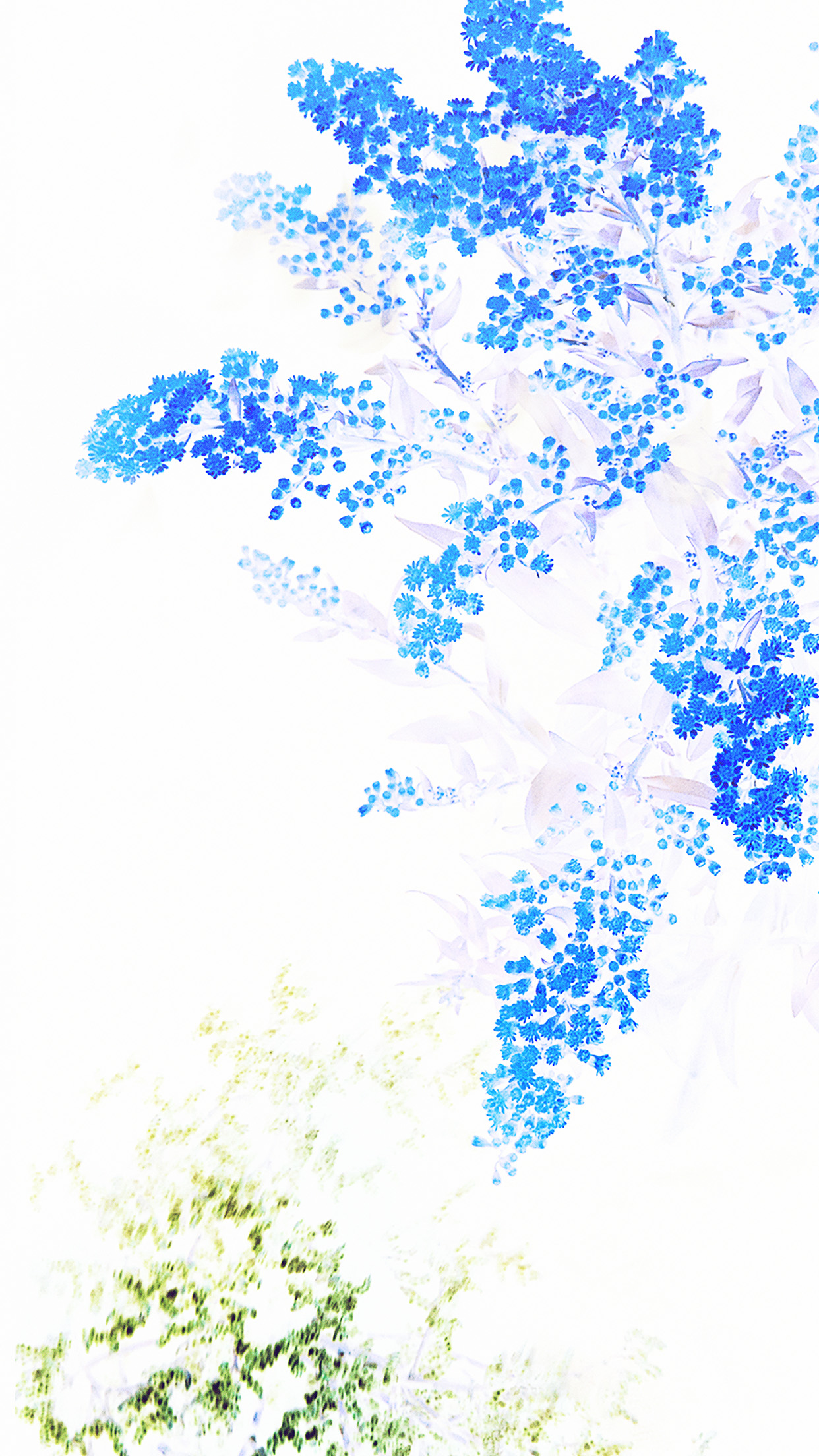 An61 Apple Blue White Flower Ios9 Iphone6s Papers Co