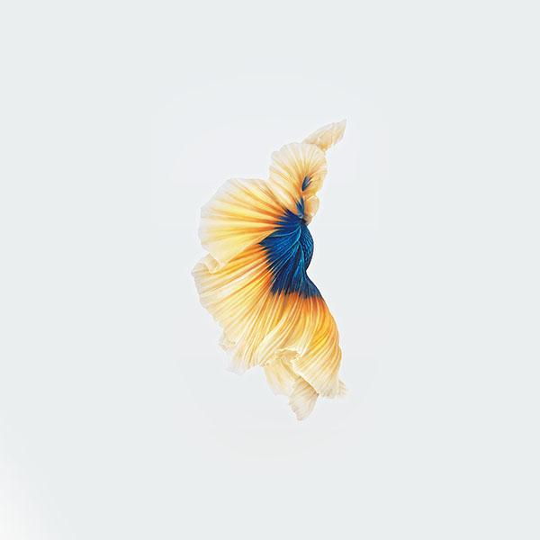 iPapers.co-Apple-iPhone-iPad-Macbook-iMac-wallpaper-an71-apple-live-photo-ios9-iphone6-yellow-wallpaper