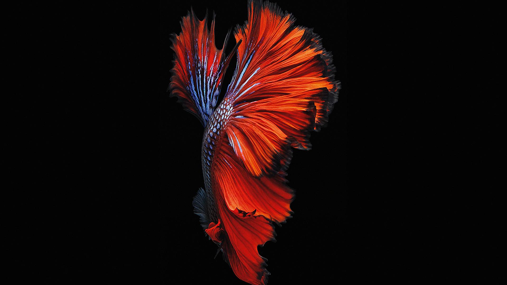 An82 Apple Ios9 Fish Live Background Dark Blue: An81-apple-ios9-fish-live-background-dark-red