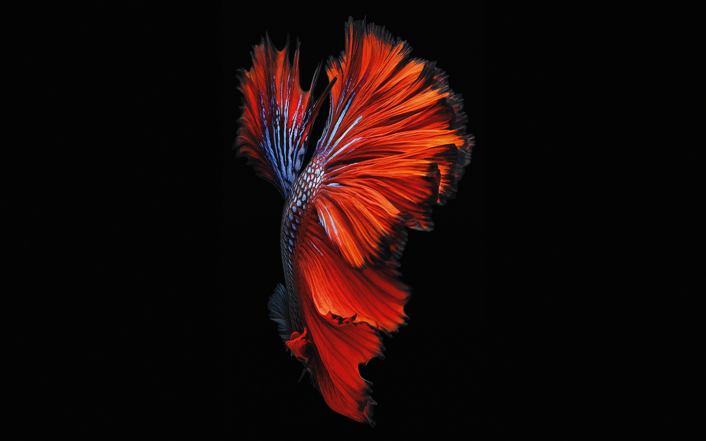 An81 Apple Ios9 Fish Live Background Dark Red Papersco