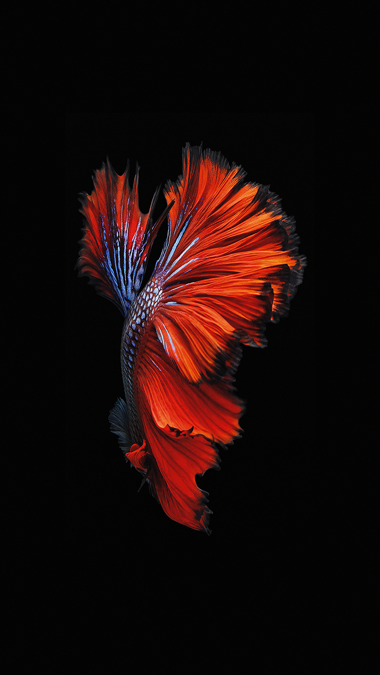 Iphone wallpaper an81 apple ios9 fish live - Iphone 7 love wallpaper hd ...