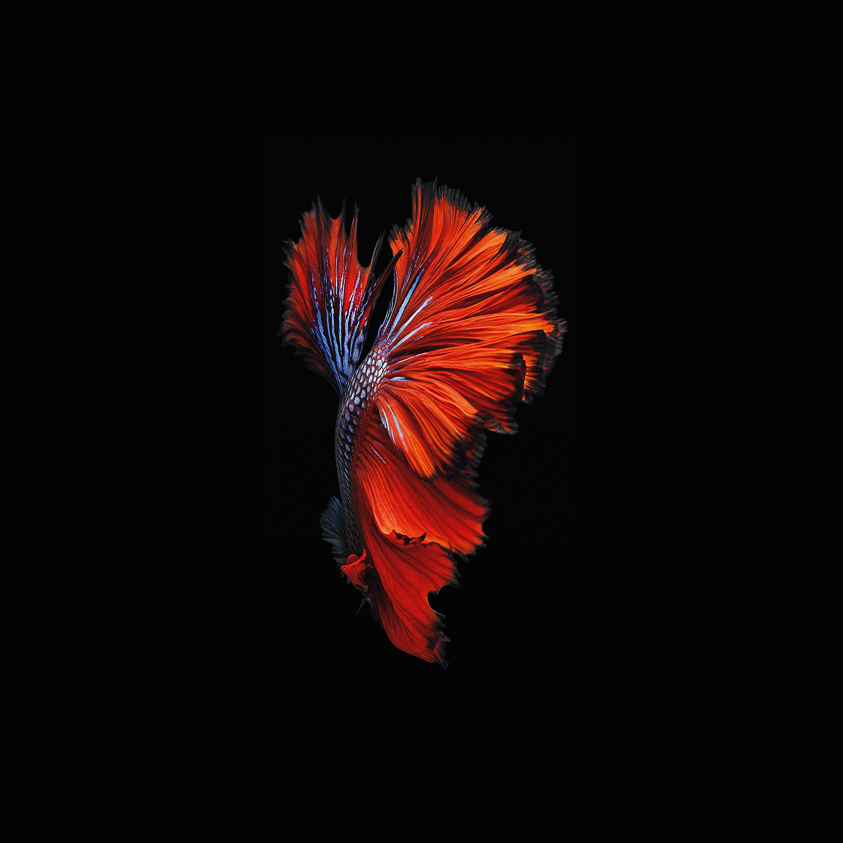 an81 apple ios9 fish live background dark red. Black Bedroom Furniture Sets. Home Design Ideas