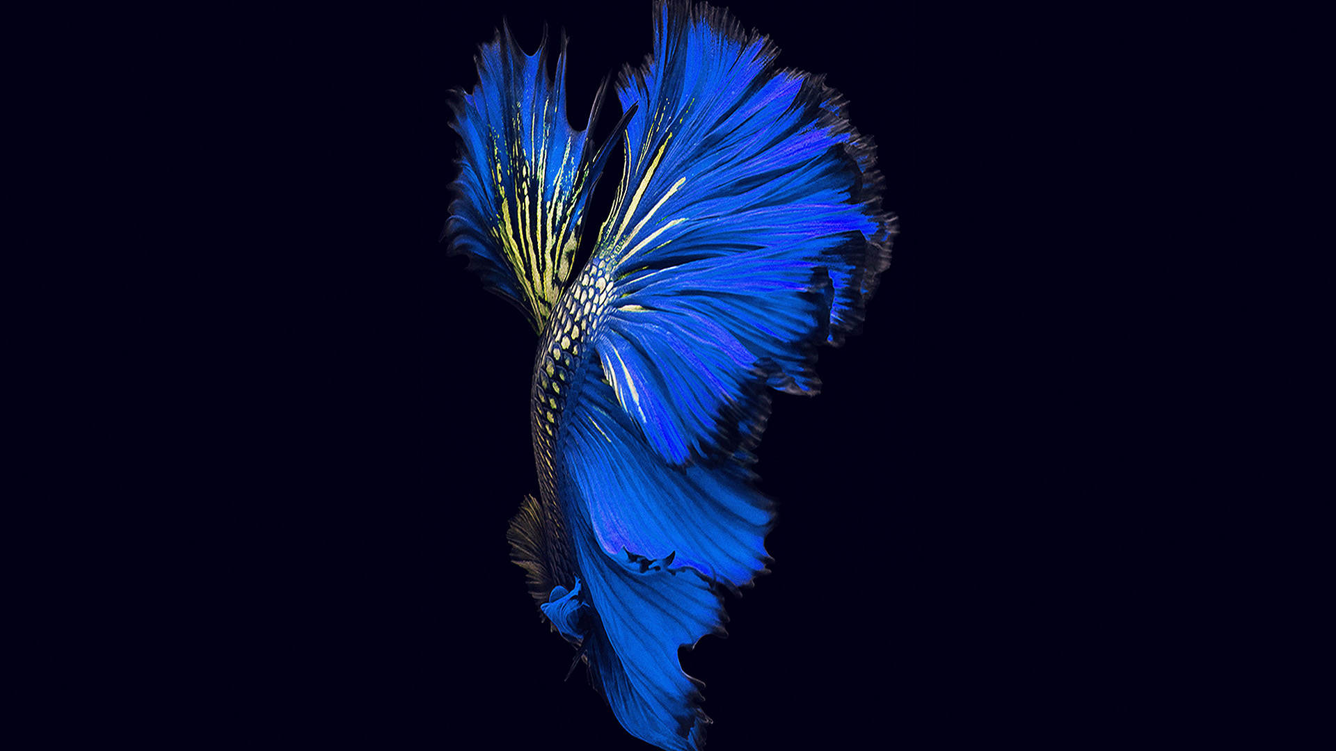 An82 Apple Ios9 Fish Live Background Dark Blue Papers Co