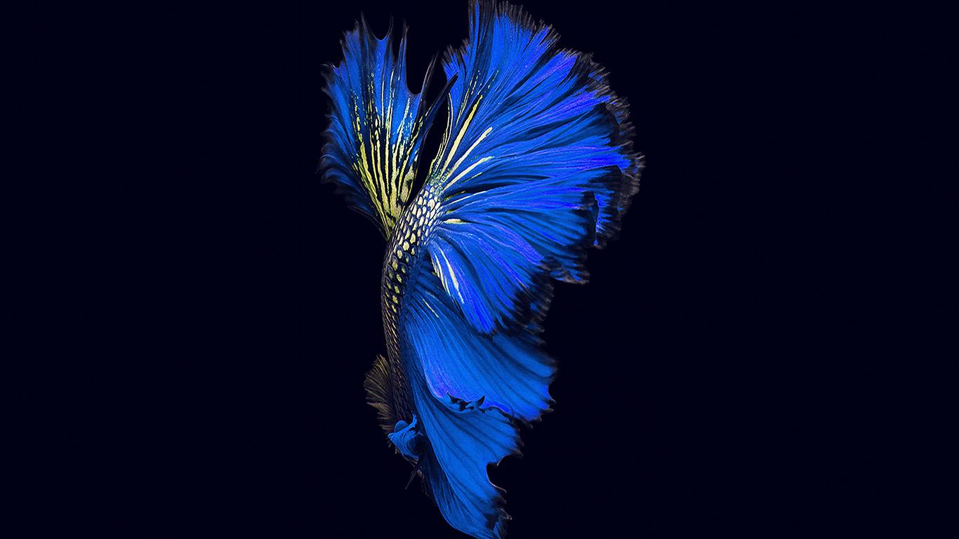 desktop-wallpaper-laptop-mac-macbook-air-an82-apple-ios9-fish-live-background-dark-blue-wallpaper