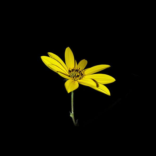iPapers.co-Apple-iPhone-iPad-Macbook-iMac-wallpaper-an99-flower-yellow-nature-art-dark-minimal-simple-wallpaper