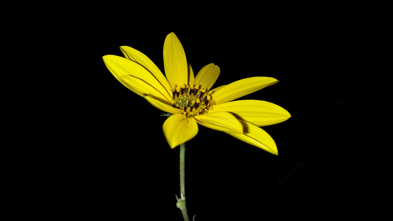 desktop-wallpaper-laptop-mac-macbook-airan99-flower-yellow-nature-art-dark-minimal-simple-wallpaper