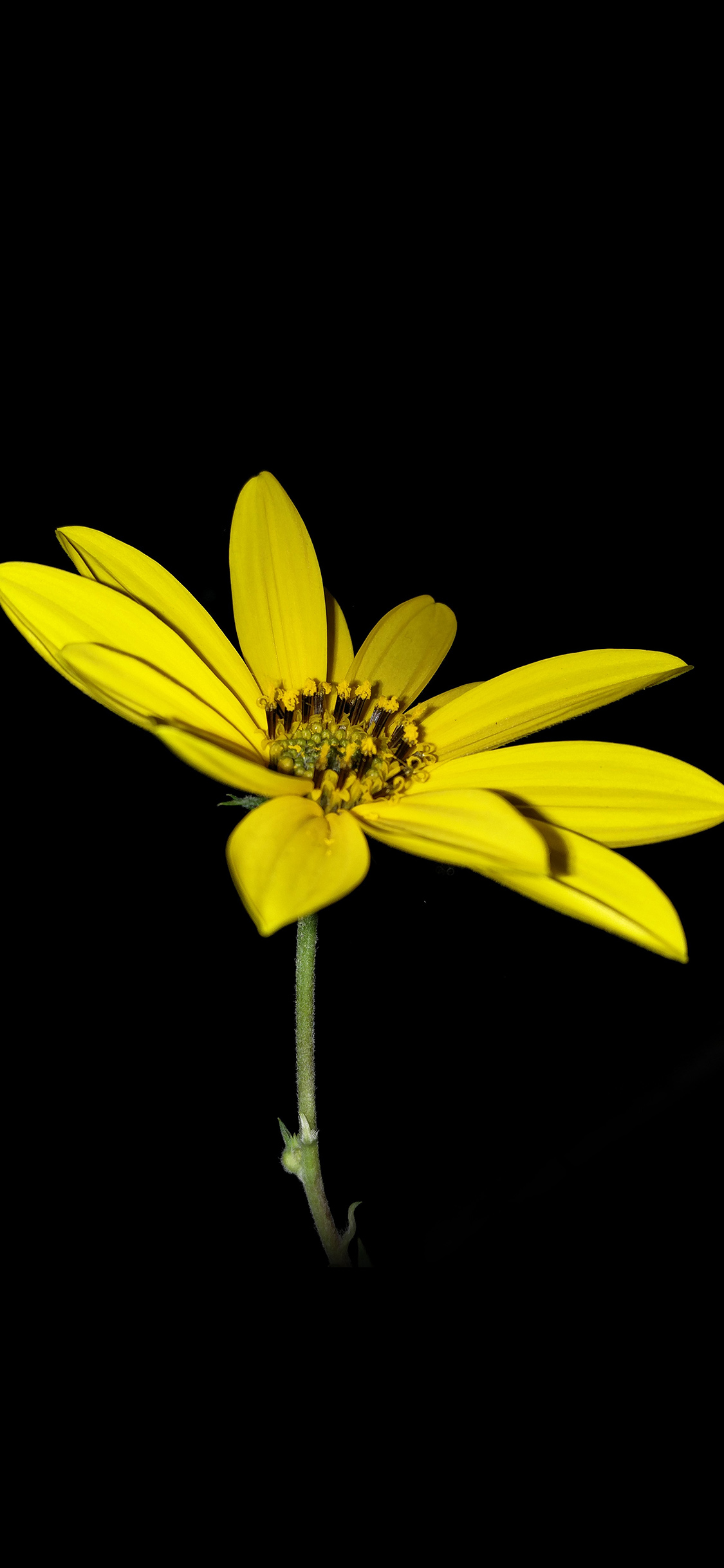 Papers Co Iphone Wallpaper An99 Flower Yellow Nature Art Dark Minimal Simple