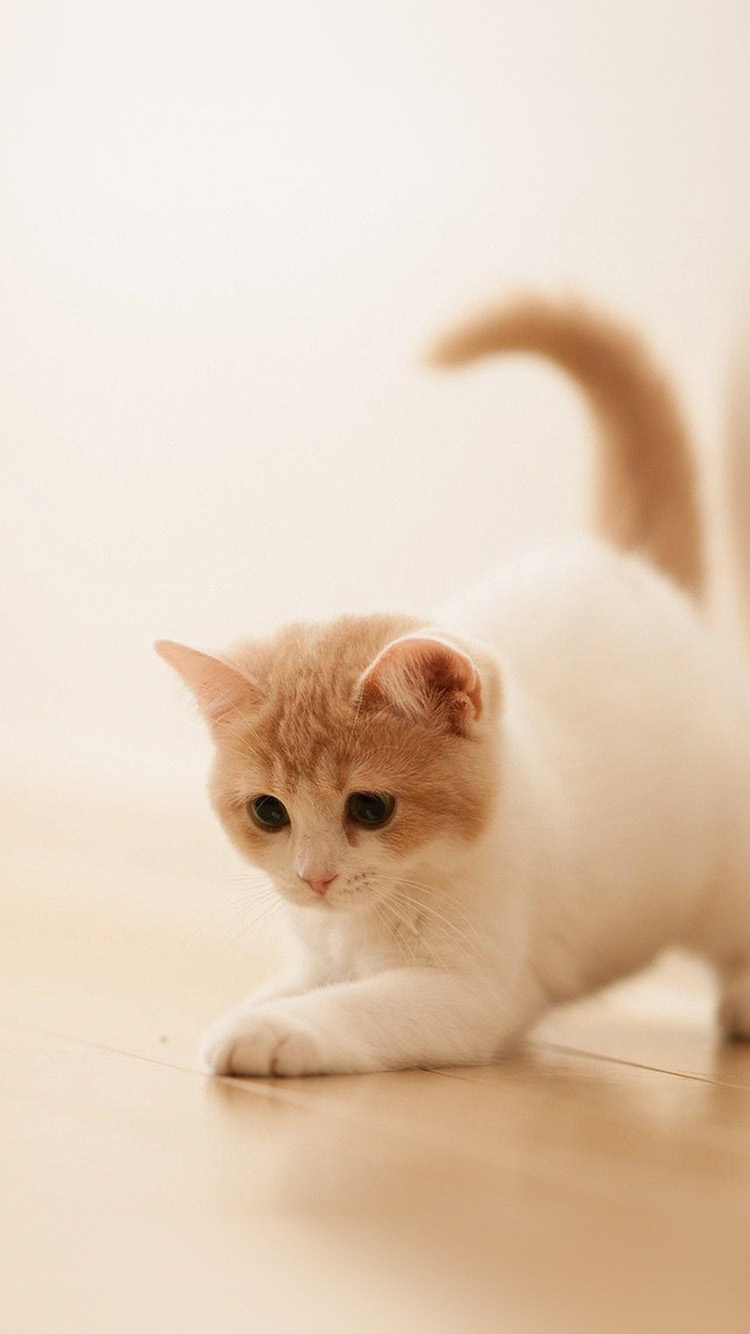 Papers.co-iPhone5-iphone6-plus-wallpaper-ap58-cute-cat-kitten-animal