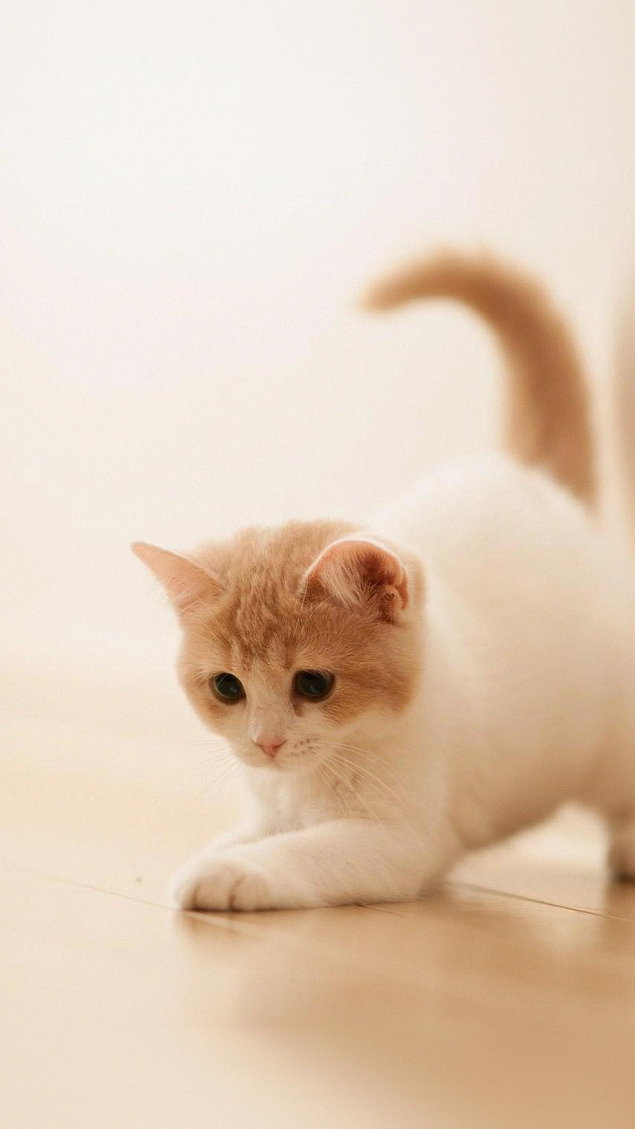 Iphone7paperscom Iphone7 Wallpaper Ap58 Cute Cat Kitten Animal