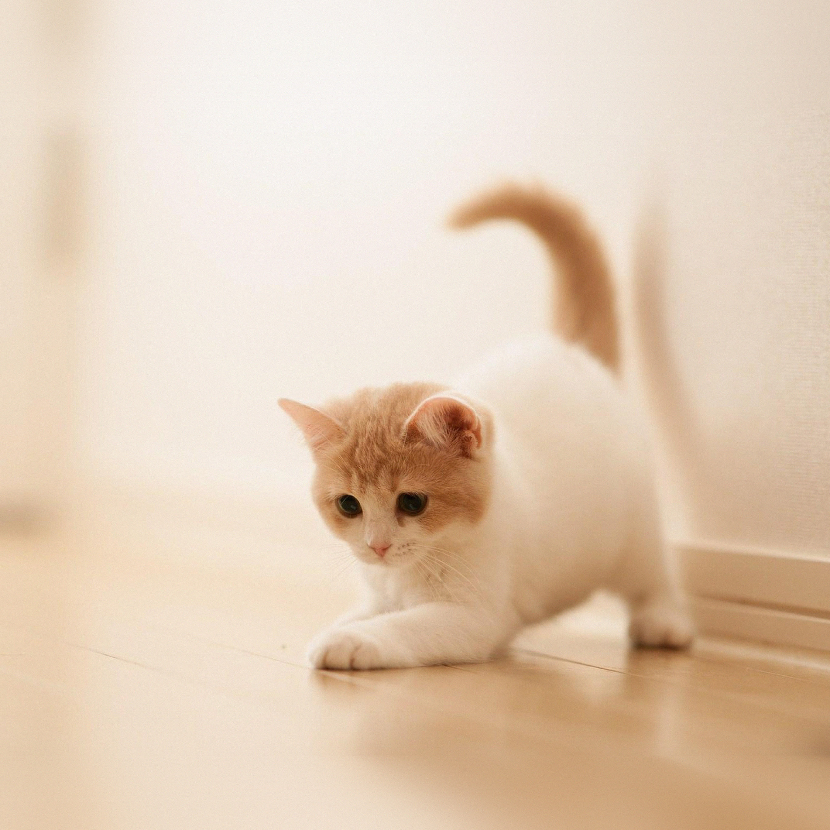 Ap58 Cute Cat Kitten Animal Wallpaper