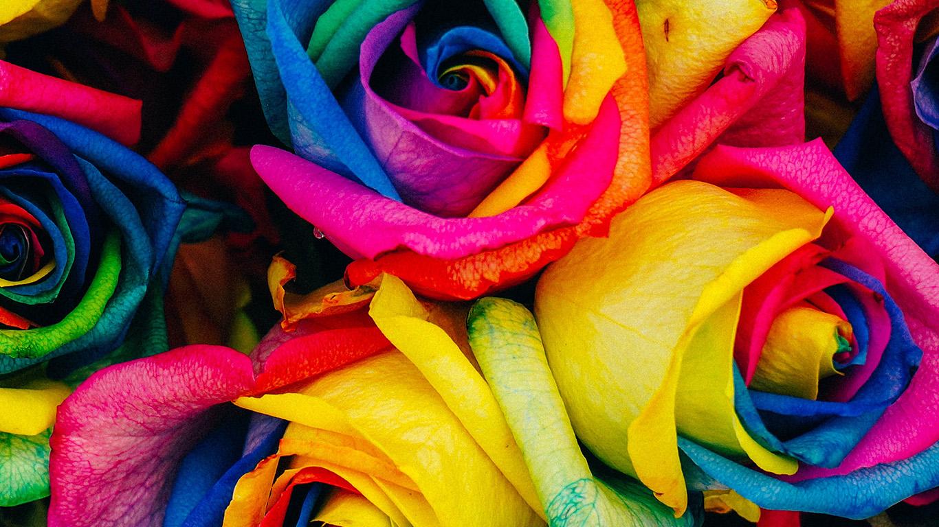 desktop-wallpaper-laptop-mac-macbook-air-as98-flower-rose-color-rainbow-art-nature-wallpaper