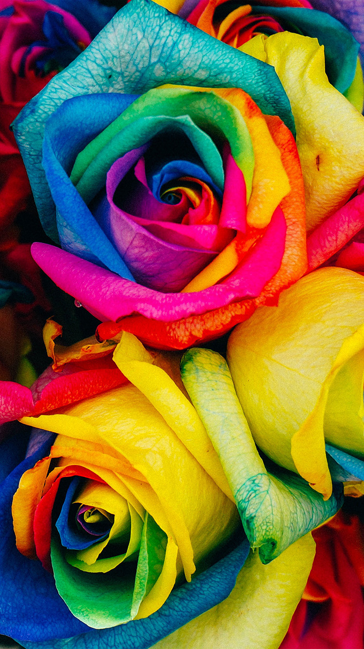 Papers.co-iPhone5-iphone6-plus-wallpaper-as98-flower-rose-color-rainbow-art-nature