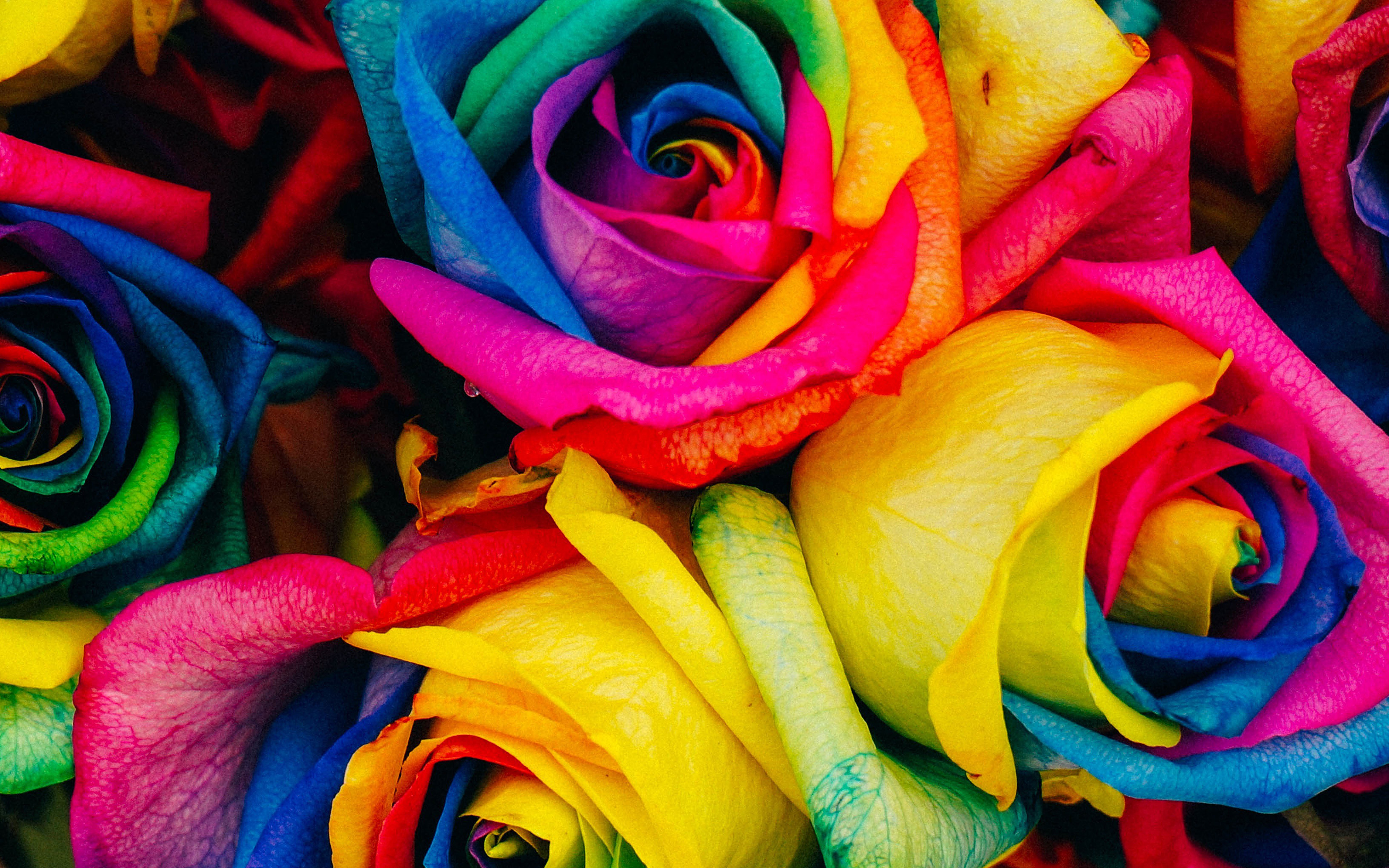As98 Flower Rose Color Rainbow Art Nature Wallpaper