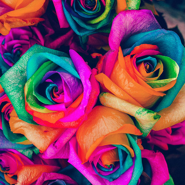 iPapers.co-Apple-iPhone-iPad-Macbook-iMac-wallpaper-as99-flower-rose-color-blue-rainbow-art-nature-wallpaper
