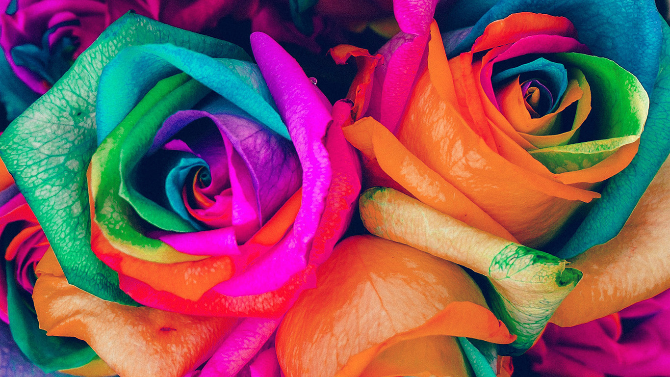 wallpaper-desktop-laptop-mac-macbook-as99-flower-rose-color-blue-rainbow-art-nature