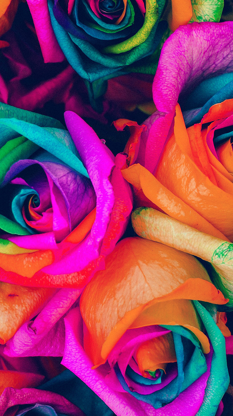 iPhone7papers.com-Apple-iPhone7-iphone7plus-wallpaper-as99-flower-rose-color-blue-rainbow-art-nature