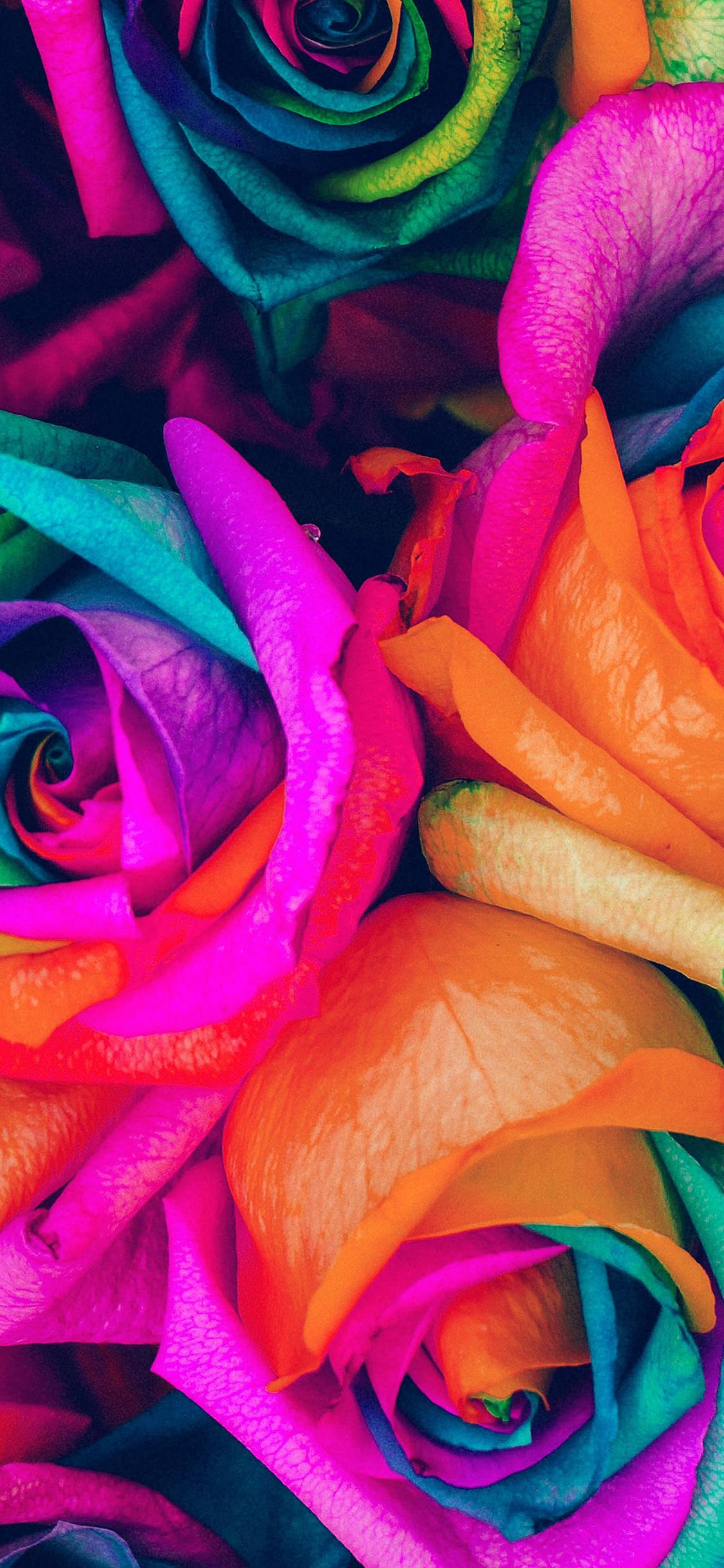 iPhoneXpapers.com-Apple-iPhone-wallpaper-as99-flower-rose-color-blue-rainbow-art-nature