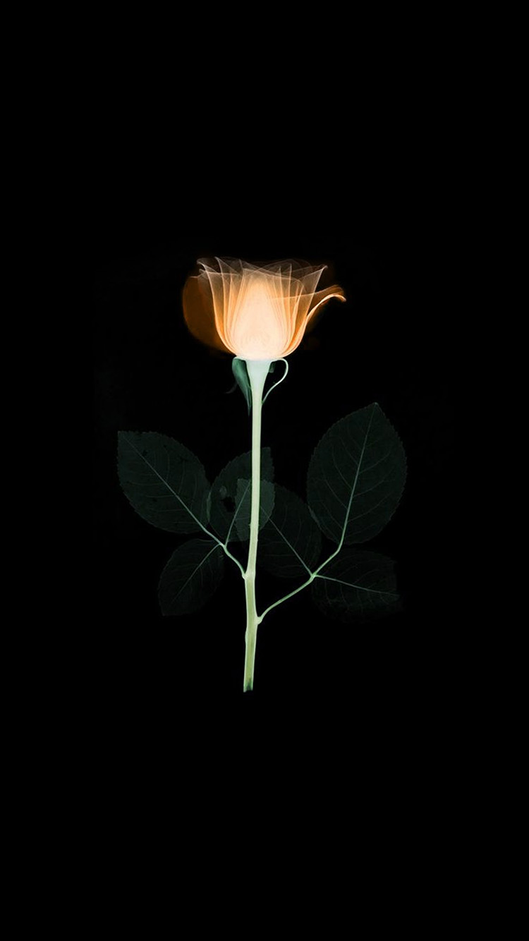 iPhone7papers.com-Apple-iPhone7-iphone7plus-wallpaper-at75-flower-xray-simple-minimal-orange-rose-dark-art-illustration
