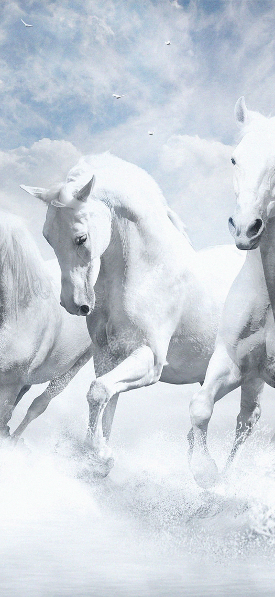 Papersco Iphone Wallpaper Au21 White Horses Water Sky