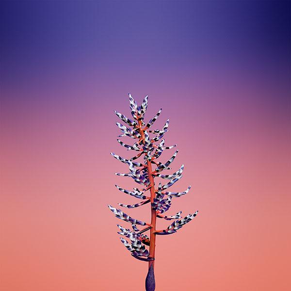 iPapers.co-Apple-iPhone-iPad-Macbook-iMac-wallpaper-bb84-iphonex-apple-illustration-art-flower-blue-wallpaper