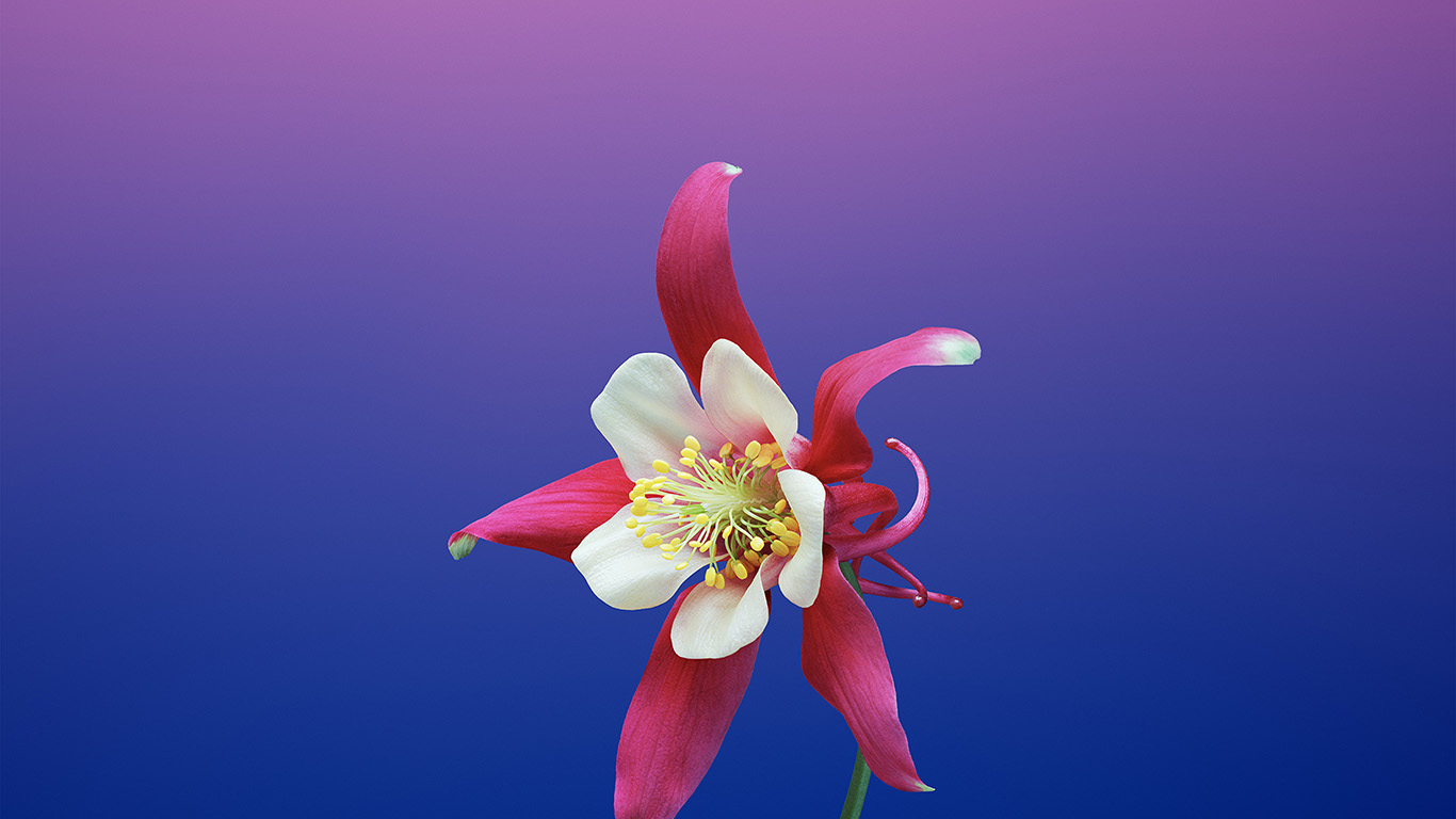 desktop-wallpaper-laptop-mac-macbook-air-bc06-ios11-apple-iphone8-flower-art-illustration-wallpaper