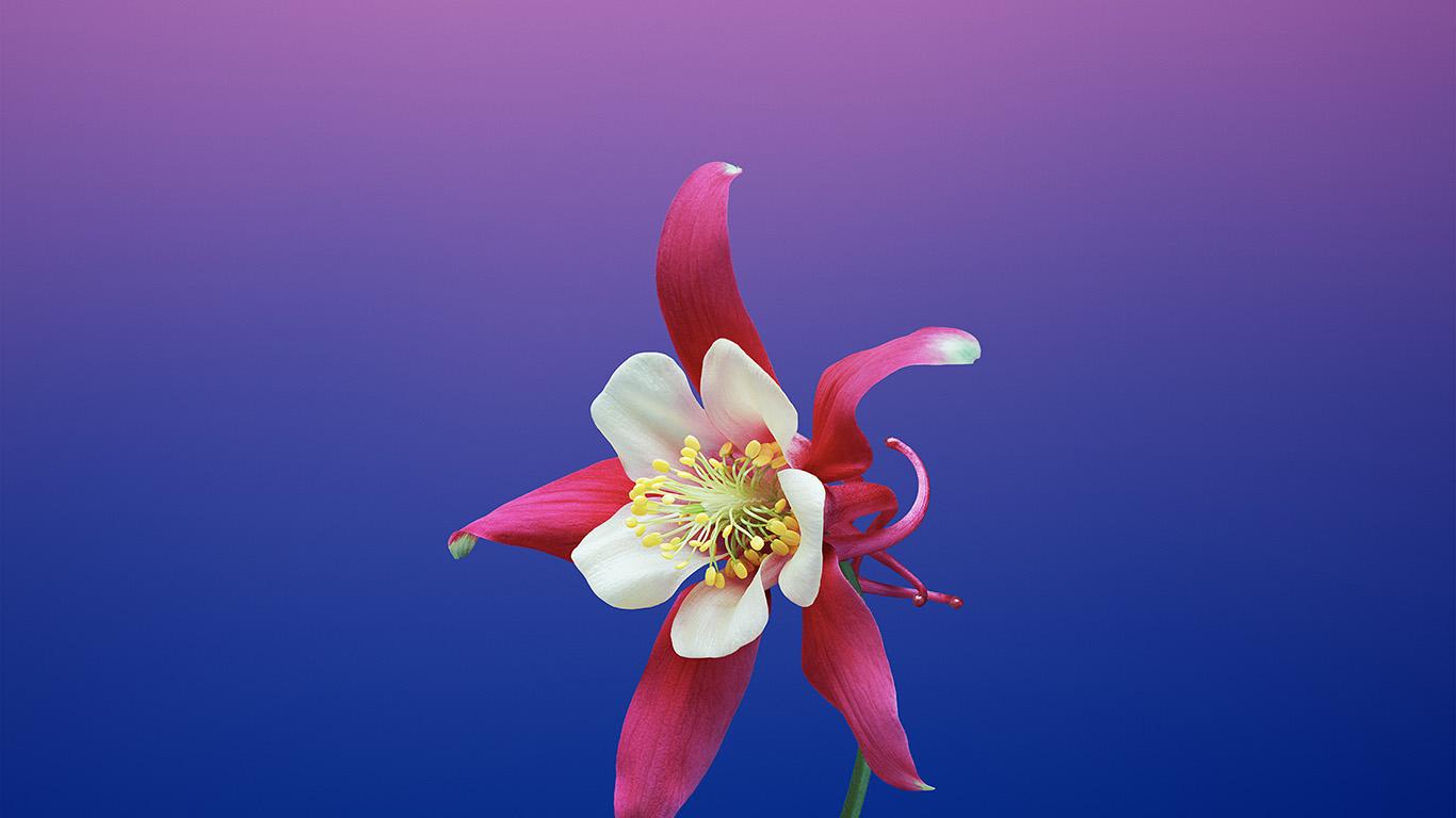 desktop-wallpaper-laptop-mac-macbook-air-bc06-ios11-apple-iphone8-flower-art-illustration-wallpaper