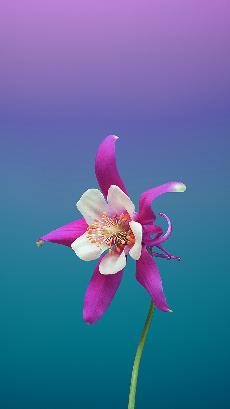 iPhonepapers.com-Apple-iPhone-wallpaper-bc07-ios11-apple-iphone8-flower-art-illustration