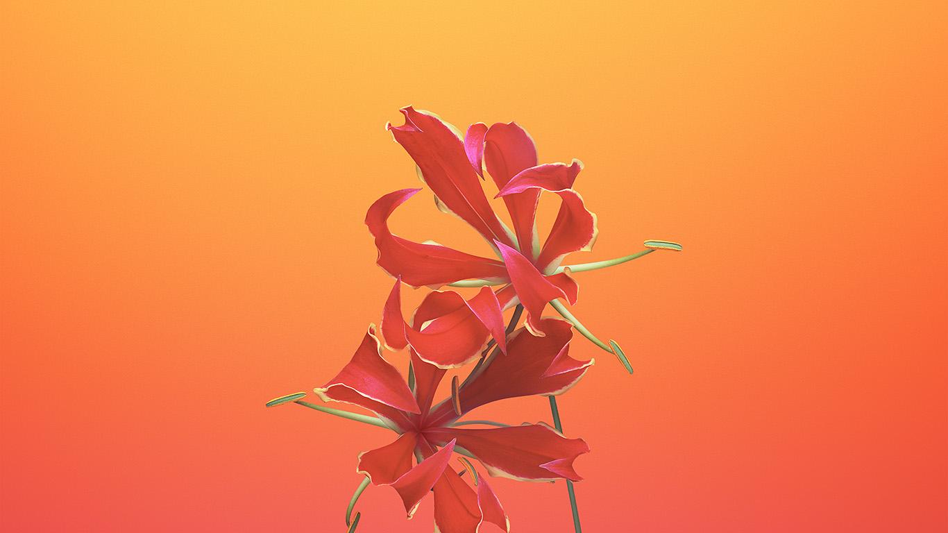 desktop-wallpaper-laptop-mac-macbook-air-bd18-apple-ios11-iphonex-flower-art-illustration-wallpaper