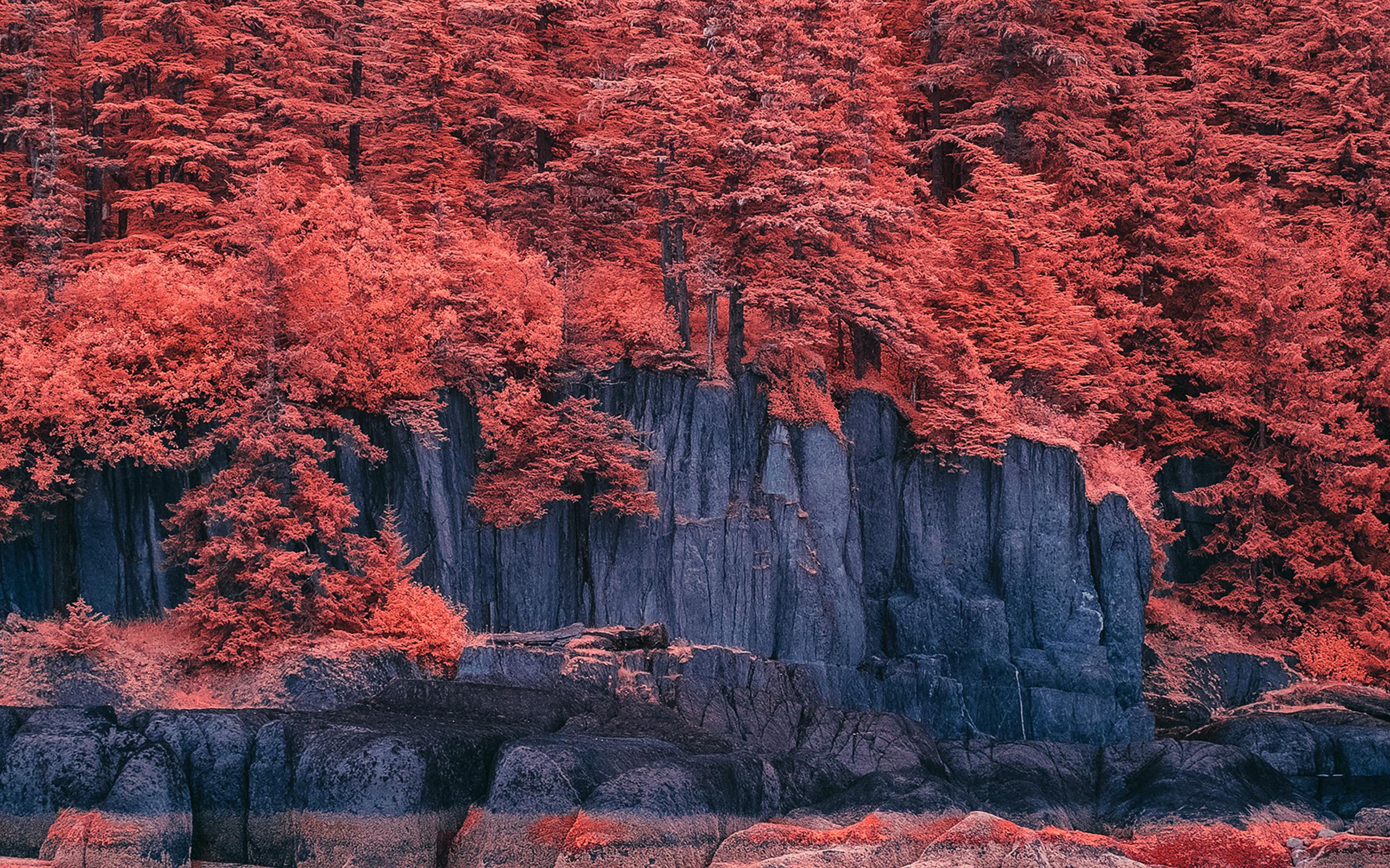 wallpaper for desktop, laptop | bd41-mountain-red-tree ...