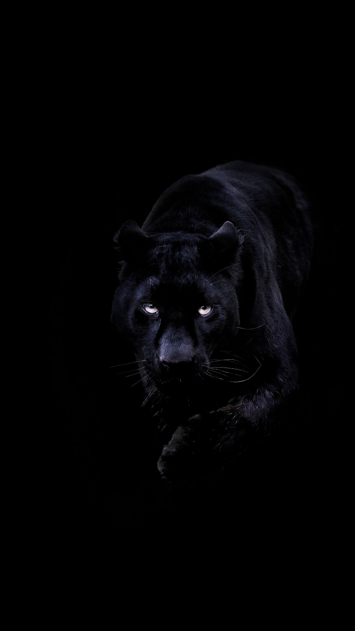 Bd93 Animal Dark Black Pahter Art Illustration Wallpaper