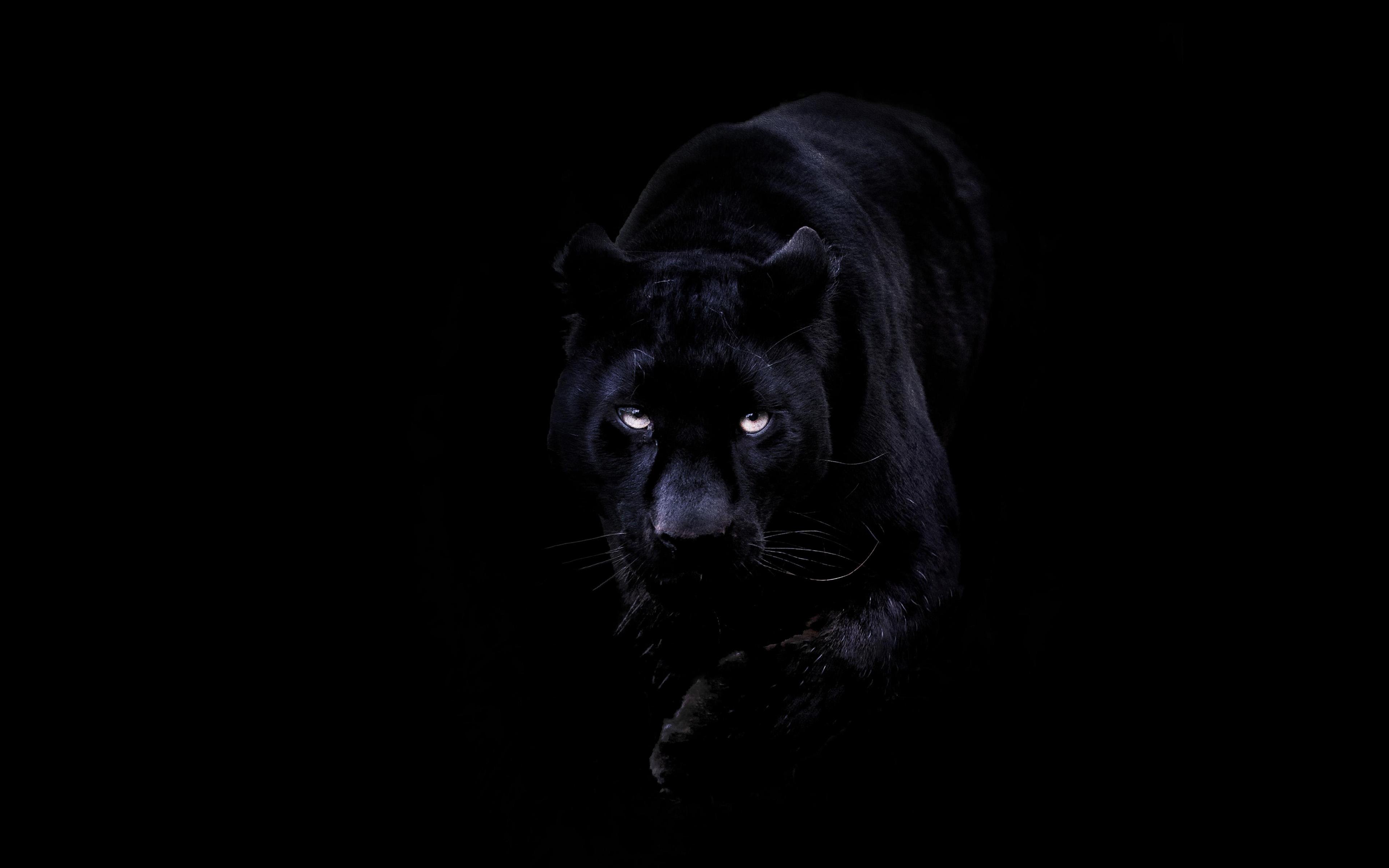 Bd93 animal dark black pahter art illustration wallpaper - Animal black background wallpaper ...