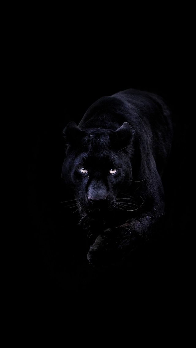 http://papers.co/wallpaper/papers.co-bd93-animal-dark-black-pahter-art-illustration-4-wallpaper.jpg