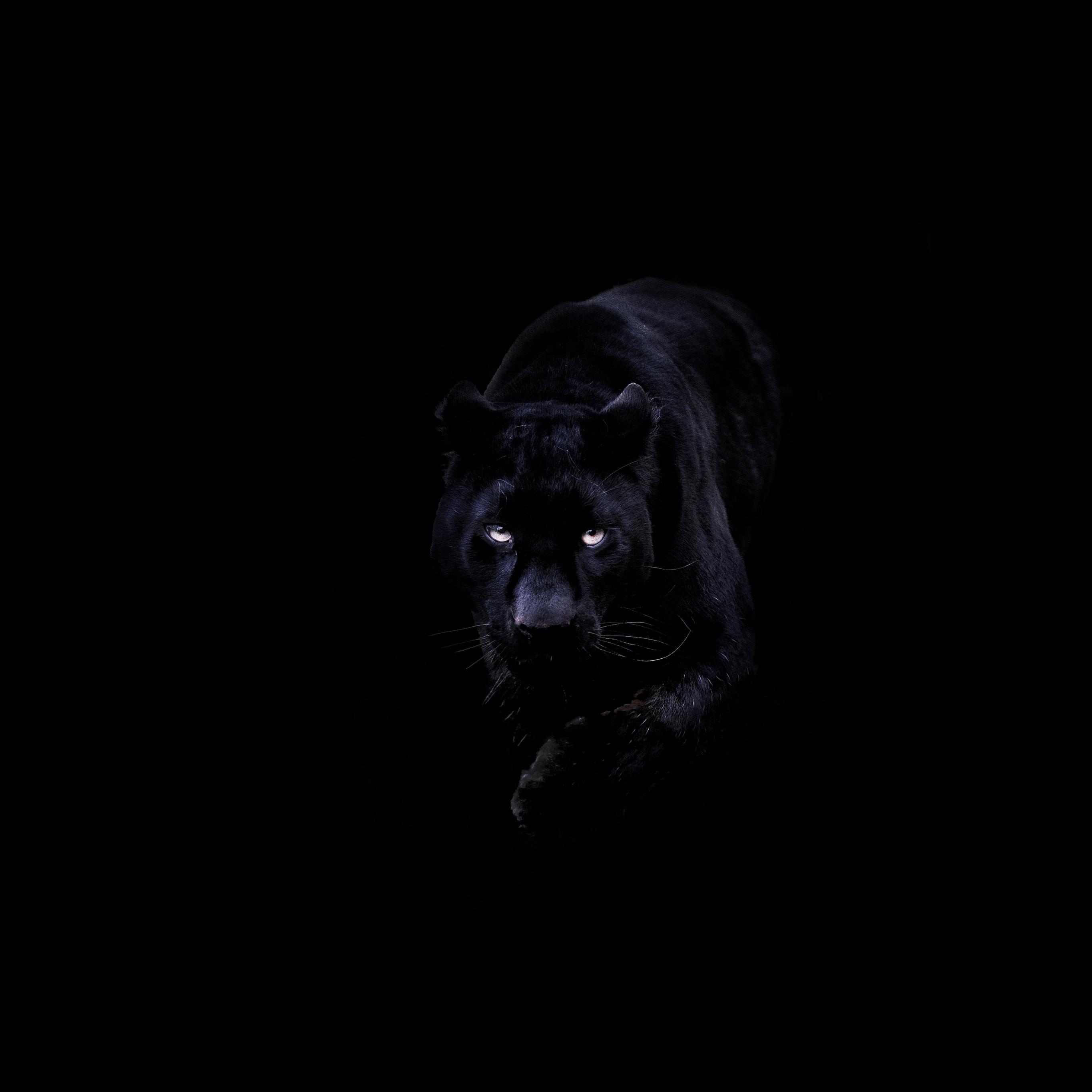 Bd93 Animal Dark Black Pahter Art Illustration Wallpaper