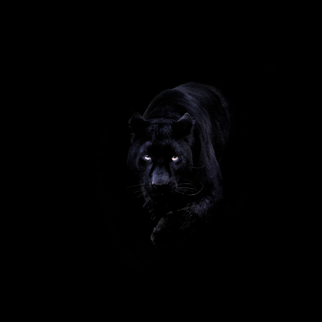 wallpaper-bd93-animal-dark-black-pahter-art-illustration-wallpaper