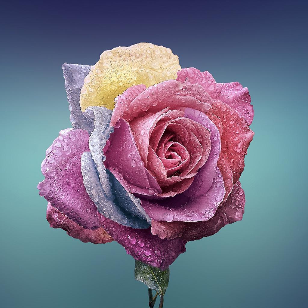 wallpaper-be61-flower-rose-art-illustration-wallpaper