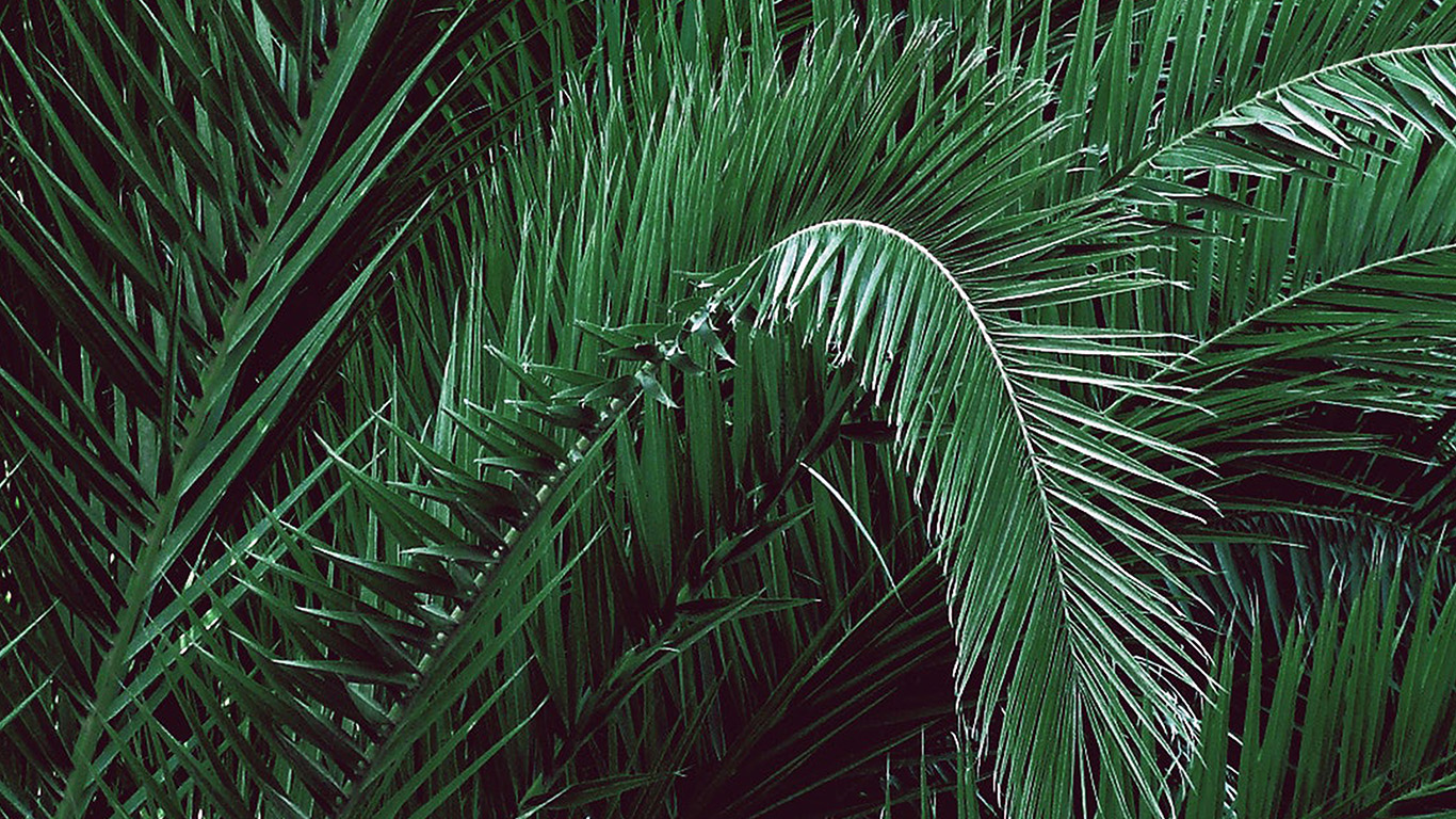 desktop-wallpaper-laptop-mac-macbook-air-be63-green-leaf-tree-art-illustration-wallpaper